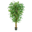 Luxury High Quality Commercial Grade Artificial Fig (Ficus) Liana Tree (None variegated) *** FREE UK MAINLAND DELIVERY ***