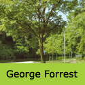 Snakebark Maple Acer Davidii George Forrest Supplied 1.5-2.50m, 7-20L Pot  ATTRACTIVE + AWARD **FREE UK MAINLAND DELIVERY + FREE 100% TREE WARRANTY**