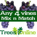 4 x Mix And Match Indoor Or Outdoor Vine All Self Fertile, 2-3 Years Old, May Fruit First Year, 3 Litre Pot **FREE UK MAINLAND DELIVERY + FREE 100% TREE WARRANTY**