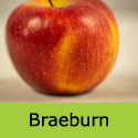 Braeburn ripe apple