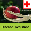 Red Devil Disease Resistant Apple Tree
