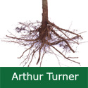 C3 BARE ROOT Arthur Turner, 1-2 m Tall, Cooking Apple, Fruits September, LARGE APPLES, BIG CROP, HARDY **FREE UK MAINLAND DELIVERY + FREE 100% TREE WARRANTY**