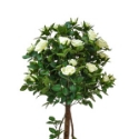 artificial rose tree with dark green leaves and white flowers in a black pot on a white background