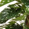 Artificial green monstera tree leaf close-up