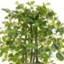 Artificial Schefflera Tree 100cm - Deluxe Quality + Pre-Potted in Attractive Grey Planter **FREE UK MAINLAND DELIVERY**