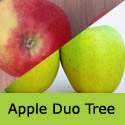 Bare Root Duo Apple Tree Elstar + Golden Delicious