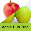Bare Root Duo Apple Tree Golden Delicious + Jonagold