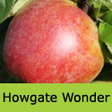 Bareroot Howgate Wonder cooking and eating apple tree