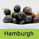 Black Hamburgh Grape Vine
