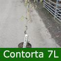 "<font color=""red"">DELIVERED AUGUST 2019</font> Corkscrew Hazel Tree or Harry Lauders Walking Stick Tree (Corylus avellana 'Contorta') Height 1.3 - 1.8 m in a 7-12 Litre container  **FREE UK MAINLAND DELIVERY + FREE 100% TREE WARRANTY**"