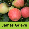 James Grieve Apple Tree (C3) SELF FERTILE + EATING AND COOKING + RELIABLE + POPULAR + CRISP,  1-3 years old, delivered 1-2m tall, **FREE UK MAINLAND DELIVERY + FREE 100% TREE WARRANTY**
