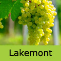 Lakemont Grape Vine