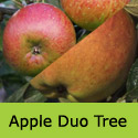 Lord Lambourne and Braeburn bare root Duo apple tree