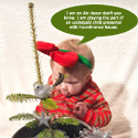 "<font color=""red"">DELIVERED AUGUST 2020</font> Real Mini Christmas Tree Gift For Baby. Abies Nordmann Fir Trees x 12  **FREE UK MAINLAND DELIVERY **"