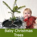 Real Mini Christmas Tree Gift For Baby. Abies Nordmann Fir Trees x 12  *FREE UK MAINLAND DELIVERY **