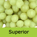 DELIVERED AUGUST 2021 Superior Seedless Grape Vine, Eating, White, Outdoor, SEEDLESS + EXCELLENT DESSERT **FREE UK DELIVERY + FREE 3 YEAR LTD WARRANTY**
