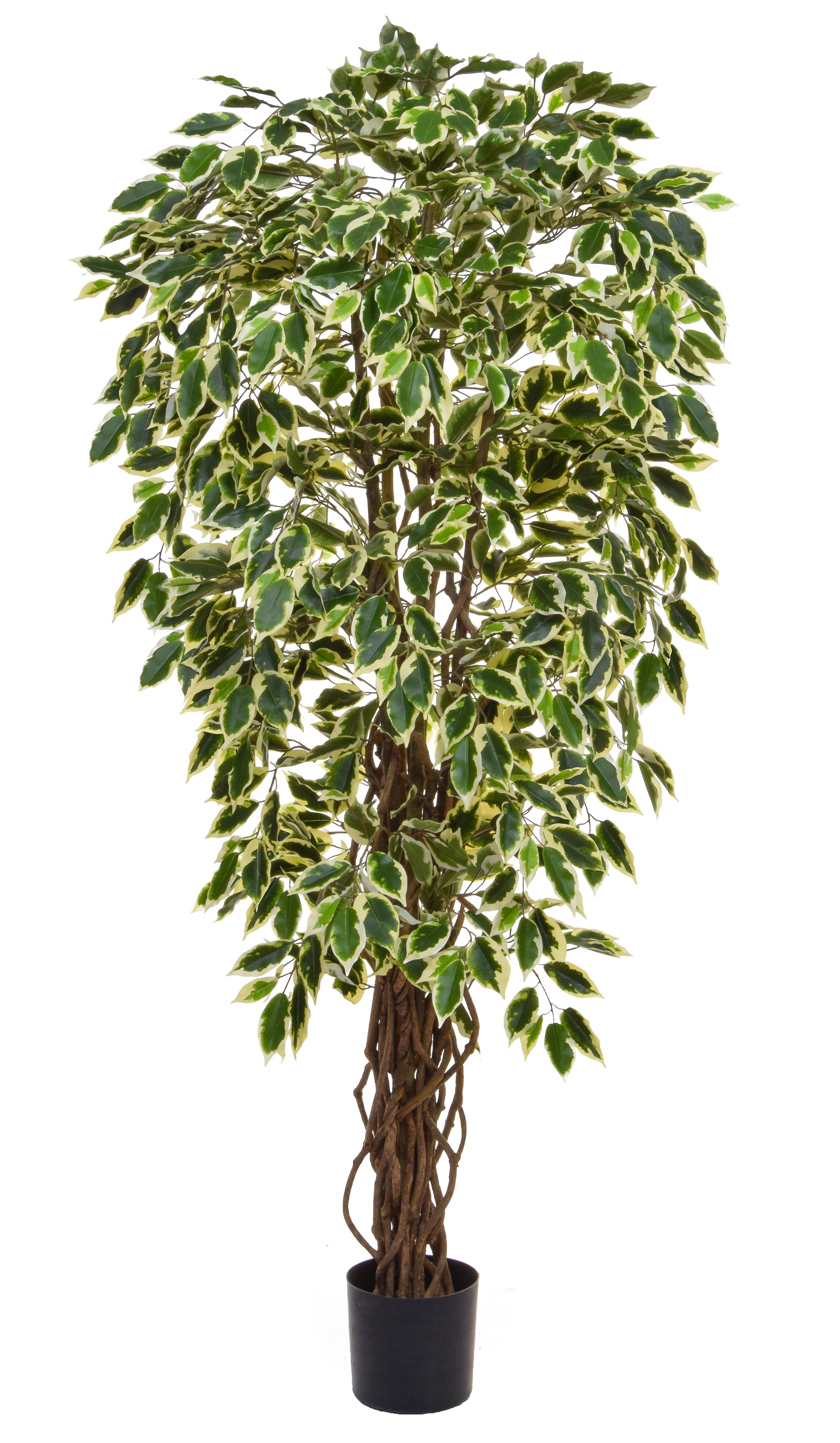 Buy Artificial Liana Fig Ficus Tree Online Free Uk Mainland