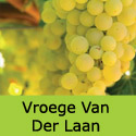 Vroege van der Laan grape vines