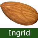 Self Fertile Almond Ingrid (Prunus persicoides Ingrid) Various Rootstocks, 2-3 years old *** FREE UK MAINLAND DELIVERY ***