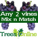 2 x Mix And Match Indoor Or Outdoor Vine All Self Fertile, 2-3 Years Old, May Fruit First Year, 3 Litre Pot **FREE UK MAINLAND DELIVERY + FREE 100% TREE WARRANTY**