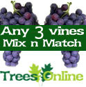 3 x Mix And Match Indoor Or Outdoor Vine All Self Fertile, 2-3 Years Old, May Fruit First Year, 3 Litre Pot **FREE UK MAINLAND DELIVERY + FREE 100% TREE WARRANTY**