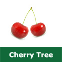 <font color=&quot;red&quot;>DELIVERED AUGUST 2019</font> E Bare Root Bigarreau Gaucher Cherry Tree, 1-2 metres tall, 1-2 years old,  (EATING +LARGE, FIRM + JUICY) **FREE UK MAINLAND DELIVERY + FREE 100% TREE WARRANTY**