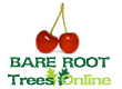 Bare Root Cherry