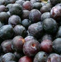 DELIVERED AUGUST 2021 Rivers Early Prolific plum(C2) Eating, Fruits Late July, Supplied Height 1.5m-2.0m, 2-3 Years Old, 7-12L pot, SELF FERTILE + HEAVY CROP + FREE UK MAINLAND DELIVERY + 100% TREE WARRANTY**