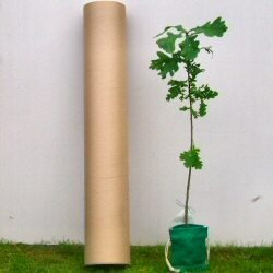 Tree in Drawstring Bag and placed in Postal Tube sent to individual UK addresses Pack of 10 individual trees **FREE UK MAINLAND DELIVERY + FREE 100% TREE WARRANTY**